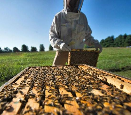 Bee farm near Broadwater in Douglas